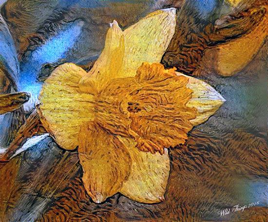 my-daffodil-van-goghed