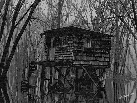 Swamp Witch Dwelling - photo by Wild Thing
